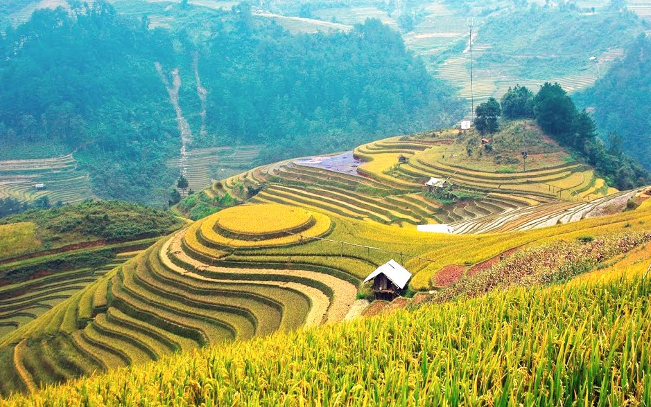 Mu Cang Chai rice terraced field