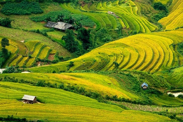 Stunning terraced fields in northern Vietnam where haven met earth