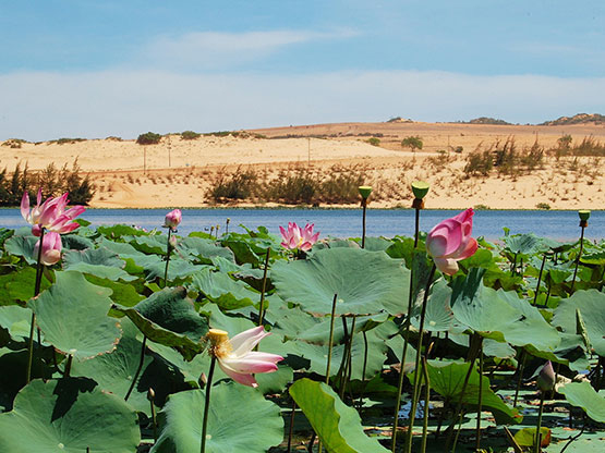 Bau Sen - Lotus Lake in the Desert of Phan Thiet